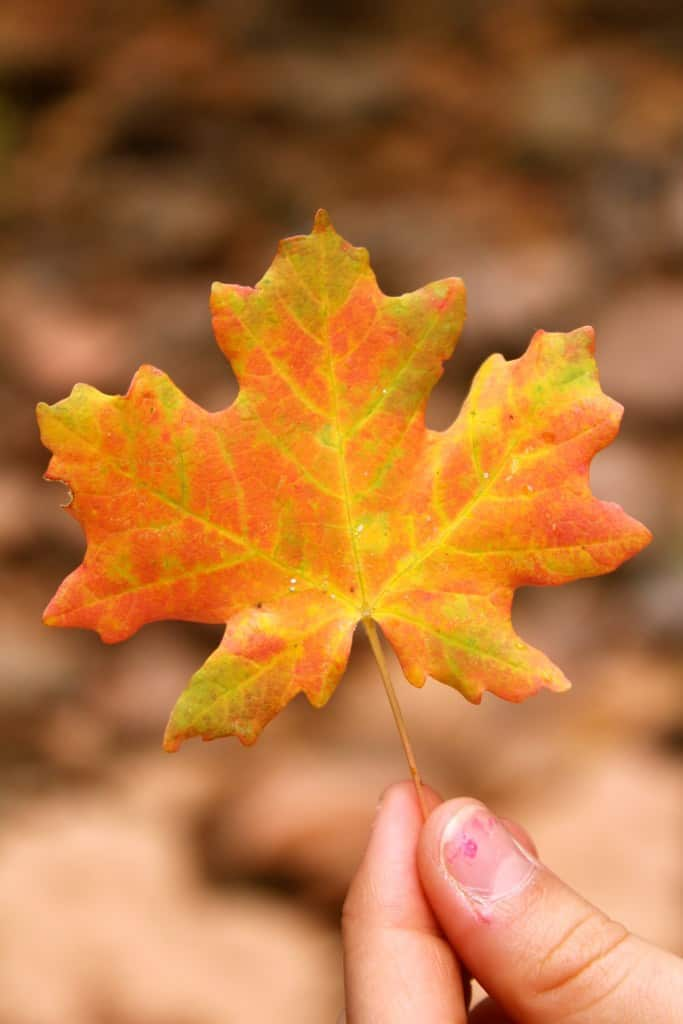 Jump Start Your Fall With These Simple and Easy Ideas